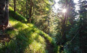 la pace e la tranquillità del bosco alpino